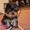 Эксклюзивные щеночки йоркширского терьера #565672