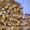 семена простых, двойных,  трехлинейных гибридов кукурузы. Артемов. Кий. Ромашка #1227086